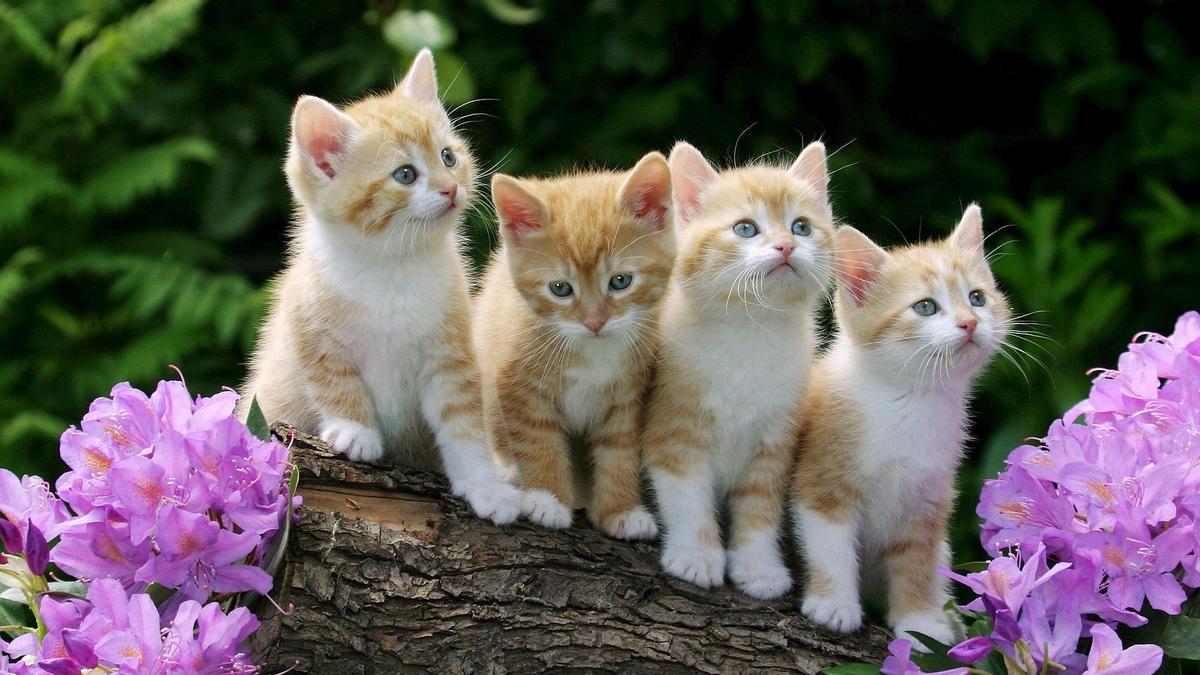 Котята снятся к беременности