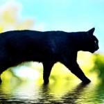 Беременность суеверия и приметы