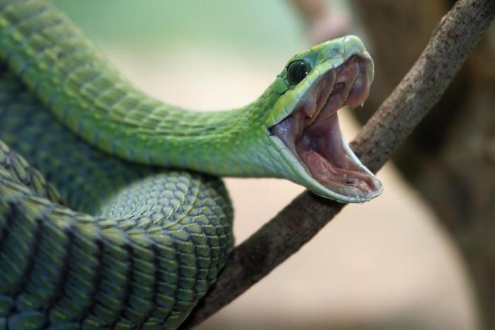 К Чему Сниться Сытая Змея
