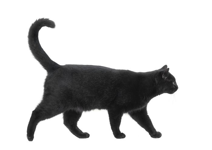 Сонник Кошка, к чему снится Кошка во сне видеть