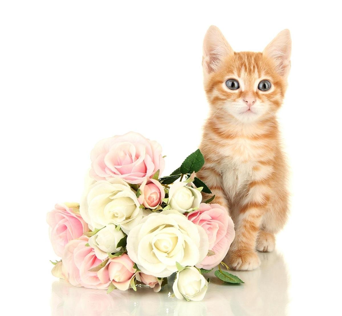 Котик любви