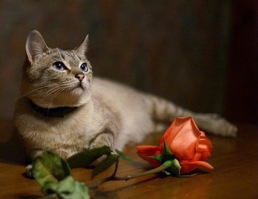 Открытки с котами фото