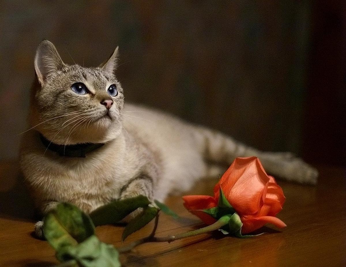 Котик счастья