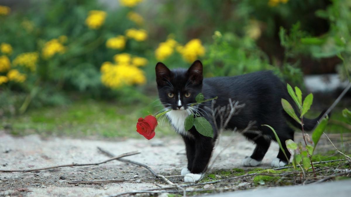Котик здоровья