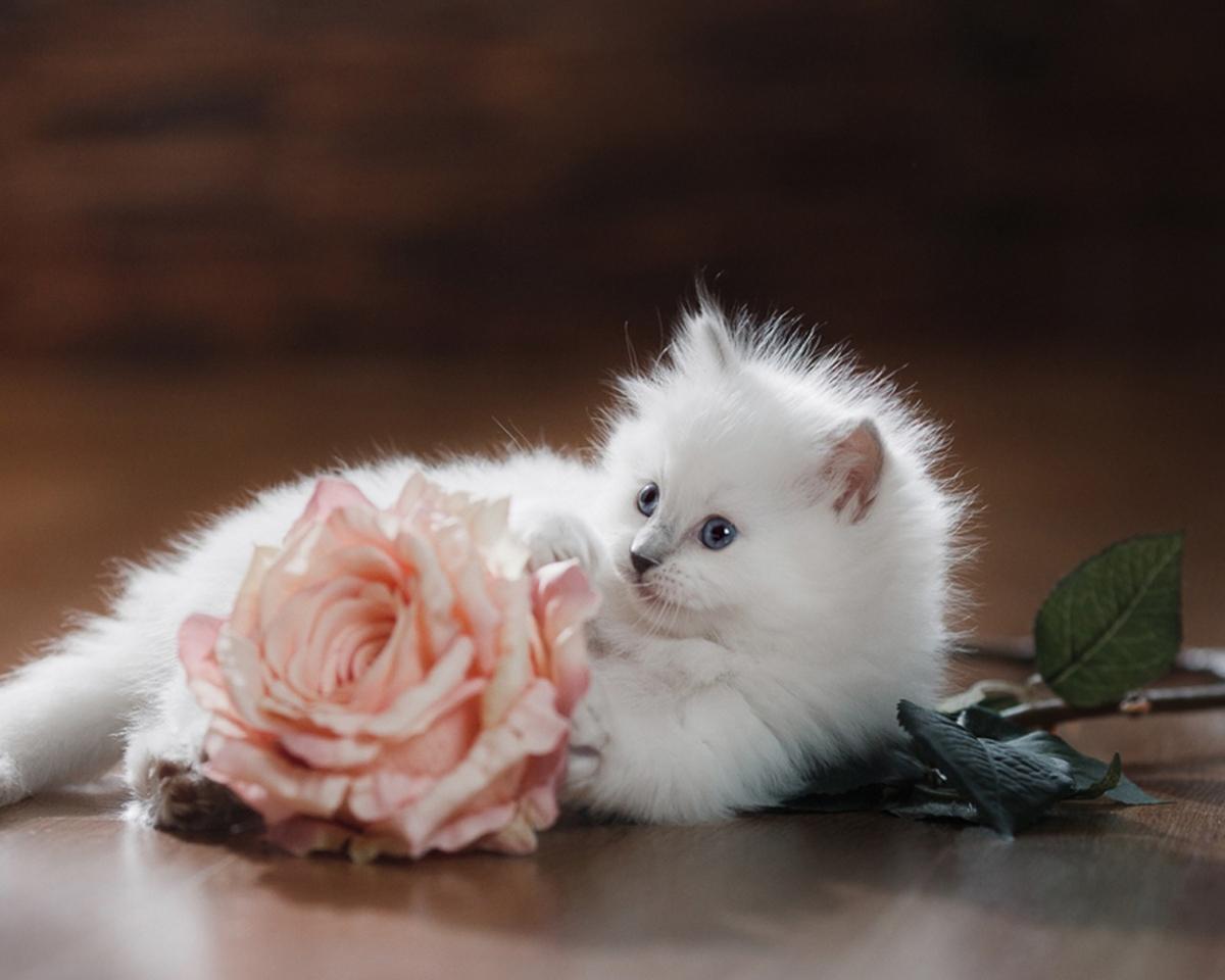 Котик мира и спокойствия