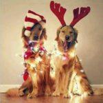 Как правильно проводить год собаки
