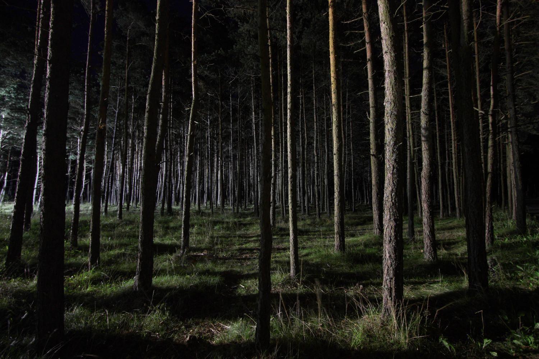 Страшная картинка лес